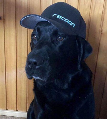 sedící černý labrador s kšiltovkou Racoon na hlavě